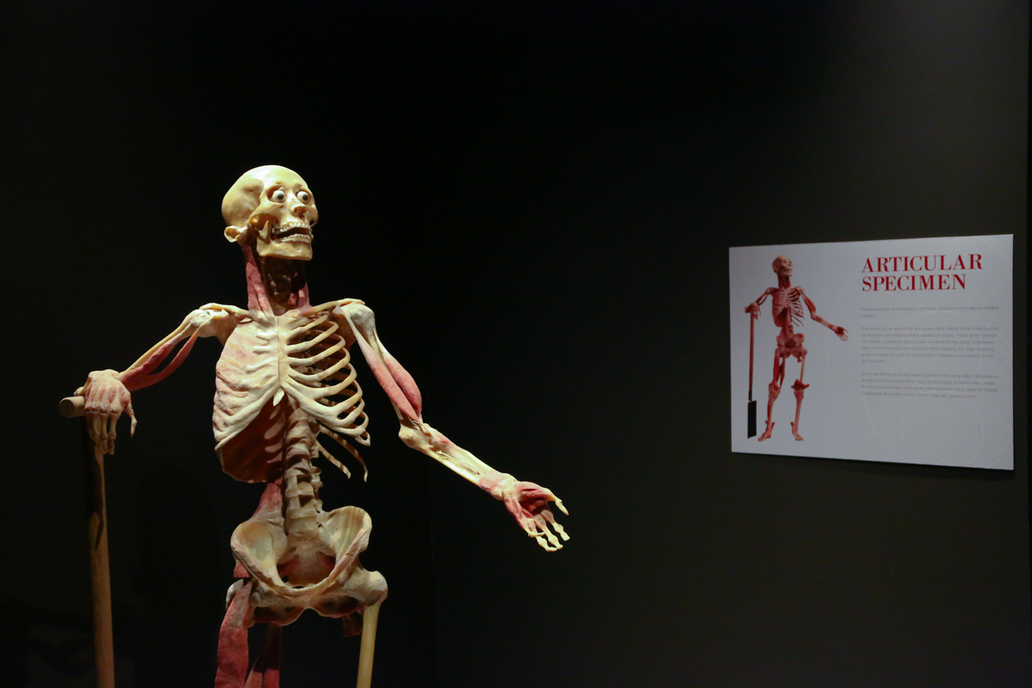 Galleries Real Bodies At Ballys